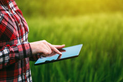 Female farmer using tablet computer in rye crop field. Concept of modern smart farming by using electronics, technology and mobile apps in agricultural Royalty Free Stock Photography