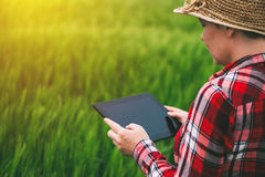 Female farmer using tablet computer in rye crop field. Concept of modern smart farming by using electronics, technology and mobile apps in agricultural Stock Image
