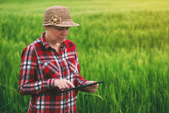 Female farmer using tablet computer in wheat crop field. Concept of modern smart farming by using electronics, technology and mobile apps in agricultural Royalty Free Stock Images