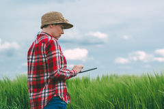Female farmer using tablet computer in wheat crop field. Concept of modern smart farming by using electronics, technology and mobile apps in agricultural Royalty Free Stock Photography