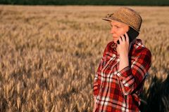 Female farmer in wheat field talking on mobile phone. Female farmer in cultivated wheat field talking on mobile phone. Woman with straw hat and plaid shirt as Stock Photo