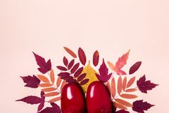Female fashion autumn rubber boots and dry leaves on pastel color background.  royalty free stock photo
