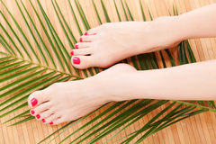 Female feet Royalty Free Stock Photo