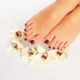 Female feet with beautiful pedicure after spa procedure Stock Photography