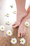 Female feet on the dark floorboard. With white daisies around Stock Image