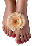 Female feet with flowers on white background royalty free stock photography