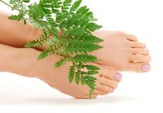 Female feet with green leaf stock photo