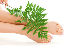 Female feet with green leaf Royalty Free Stock Photo