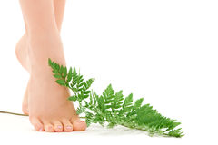 Female feet with green leaf Stock Photography
