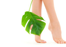 Female feet with green leaf Stock Image
