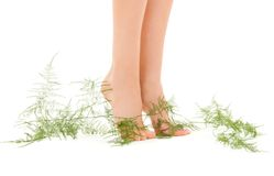 Female feet with green plant Royalty Free Stock Image