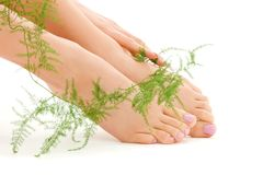 Female feet with green plant Stock Photos