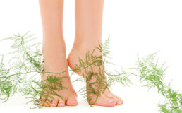 Female feet with green plant Royalty Free Stock Images