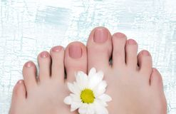 Female feet with nude pedicure. Female feet with nude pedicure on wooden background Royalty Free Stock Images