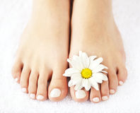 Female feet with pedicure. Soft female feet with pedicure and flowers close up Royalty Free Stock Image