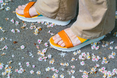 Female feet in sandals. On the pavement with flower petals royalty free stock photo