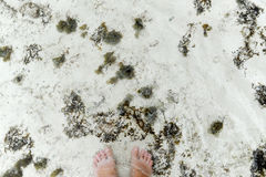 Female feet are in sea water among seaweed royalty free stock image