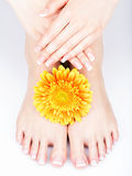 Female feet at spa salon on pedicure and manicure procedure Stock Image
