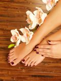Female feet at spa salon on pedicure procedure. Closeup photo of a female feet at spa salon on pedicure procedure - Soft focus image royalty free stock photography
