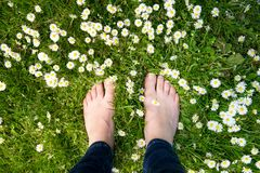 Female feet standing on green grass and white flowers Royalty Free Stock Photography