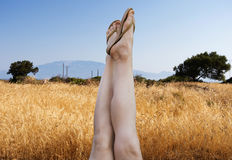 Female feet in wheat royalty free stock photo