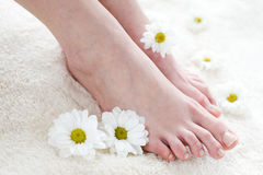 Female feet with white daisies. Royalty Free Stock Photos