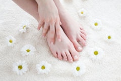 Female feet with white daisies. Beautiful female feet and hand / Spa treatment Stock Images