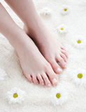 Female feet with white daisies. Stock Photo