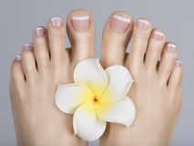 Female feet with white french pedicure on nails. at spa salon Royalty Free Stock Images