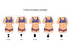 Female figure types. Vector illustration of female figure types. sport stock illustration