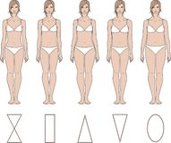 Female figures. Vector illustration of female figures. Different body types Royalty Free Stock Images