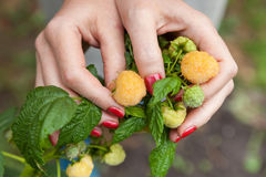 Female fingers holding large raspberry Royalty Free Stock Photos