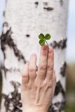 Female fingers with three leaves clover Stock Photo