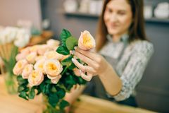 Florist puts fresh roses in a vase in flower shop Stock Photo