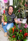 Female florist with bromelia plant Stock Photo