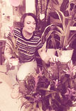 Female florist with bromelia plant Stock Image