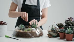 Female florist gardener decorates a mini garden in a glass vase with succulents and cacti in the sand. The concept of the florist decorator stock video footage