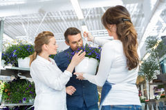Female Florist Guiding Couple In Buying Purple Royalty Free Stock Photography