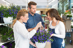 Female Florist Guiding Couple In Buying Purple Stock Images