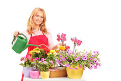 Female florist holding a can and watering flowers stock image