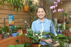 Female florist with orchid plant Royalty Free Stock Images