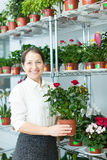 Female florist with roses plant Royalty Free Stock Photo