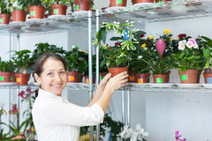 Florist with Stephanotis at  store Stock Photos