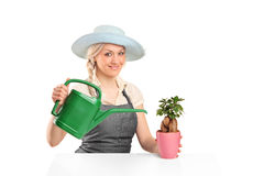 Female florist watering a bonsai tree Royalty Free Stock Photo