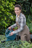 Female florist watering plants in greenhouse Stock Photos