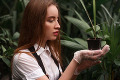 Female florist work with houseplant in pot Stock Photos