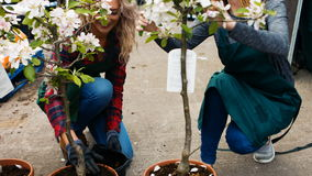 Female florists working together stock footage