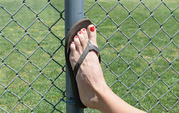 Female foot on fence royalty free stock image