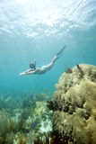 Female Free Diver Royalty Free Stock Photography