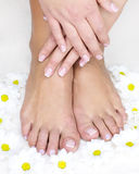 Female french manicure Stock Images